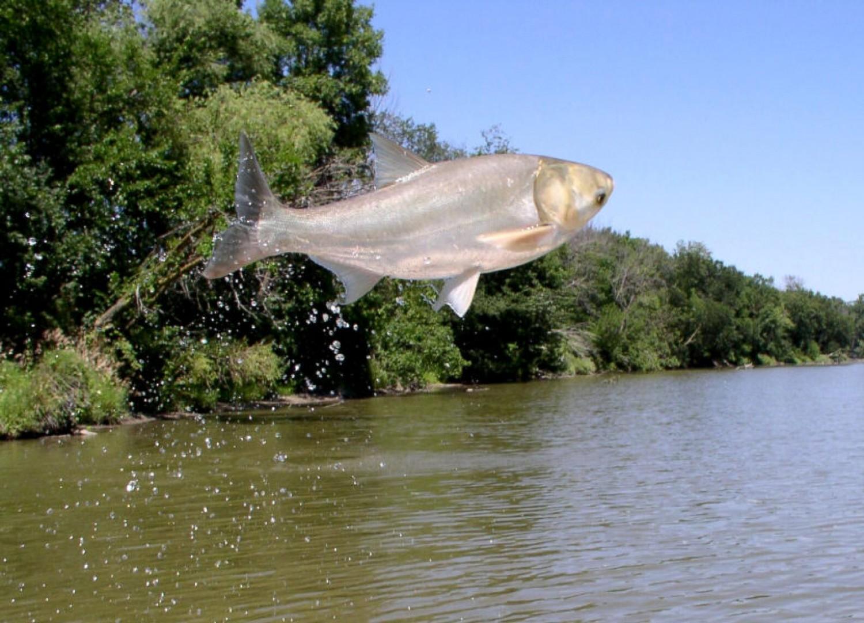 Madarak is segítik a halak szaporodását!