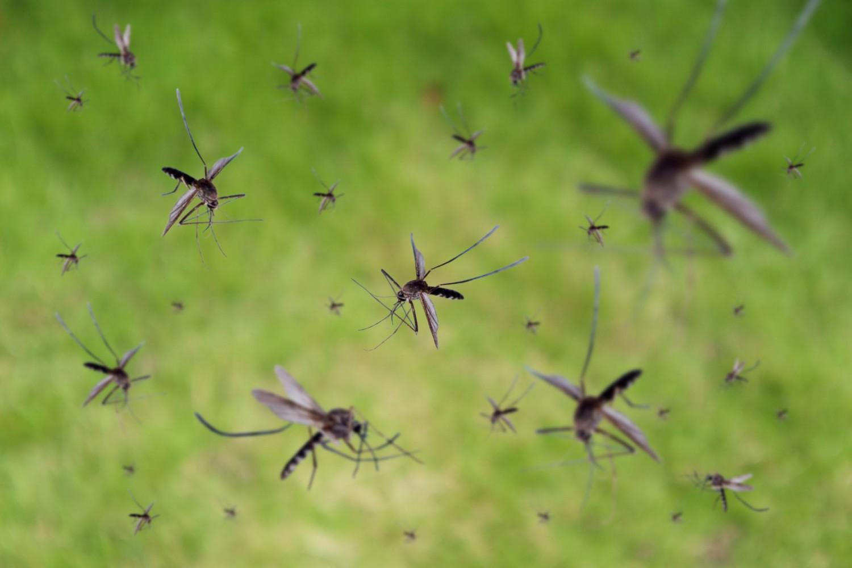 Nézze meg, az Ön településén mikor írtják a szúnyokat!