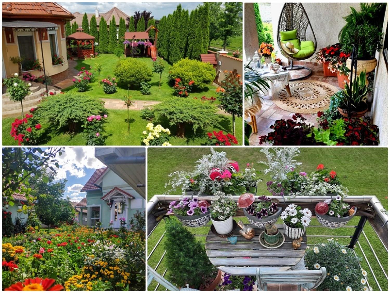 A Virágos Magyarország díjnyertes kertjei és balkonjai