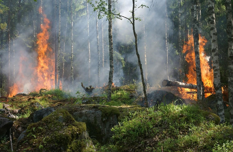 Uniós környezetvédelmi díjban részesült a magyar erdőtűz-megelőzési kezdeményezés