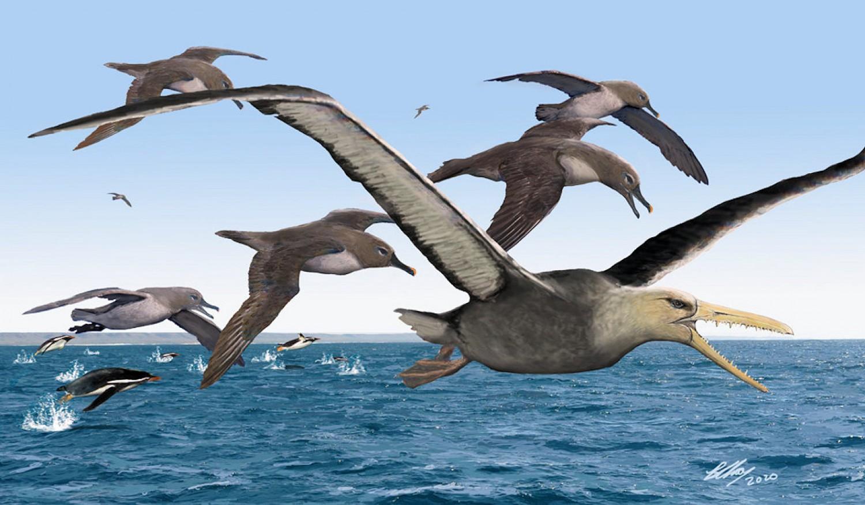Gigászi méretű ősi madárfaj élt egykor az Antrarktiszon