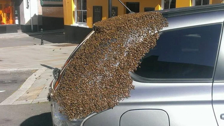 20.000 méh két napon át követ egy autót, hogy megmentsék a csapdába esett királynőt