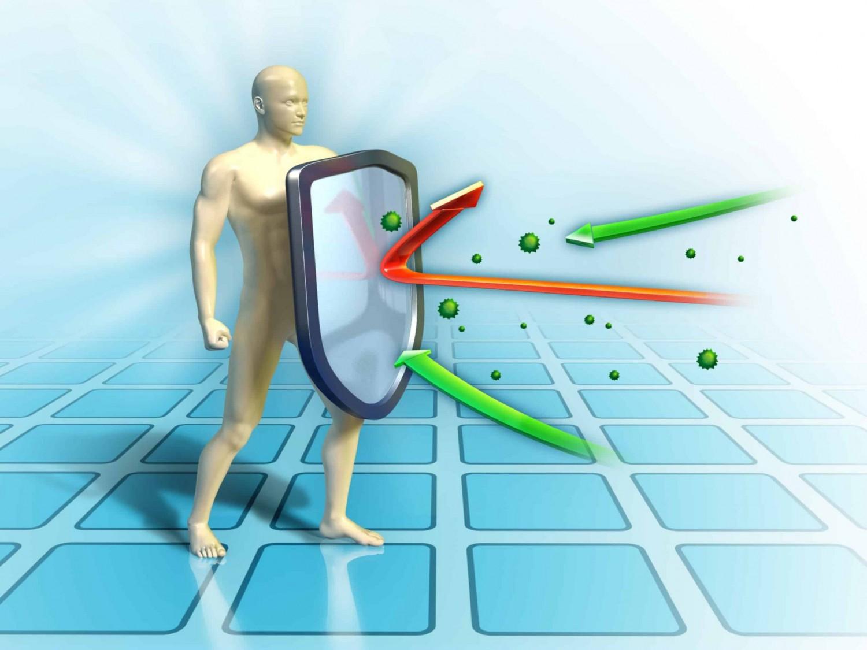 Immunrendszerünk legfőbb támogatói