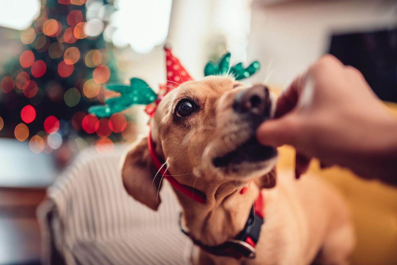 Mit ehet a kutya az ünnepek alatt? 10 tiltott és 10 veszélytelen étel a karácsonyi asztalról