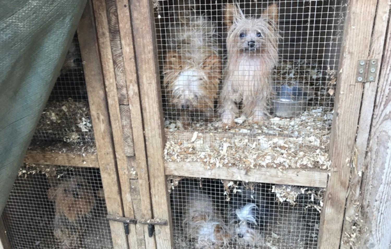 Vége az illegális kutyaszaporításnak és kereskedésnek