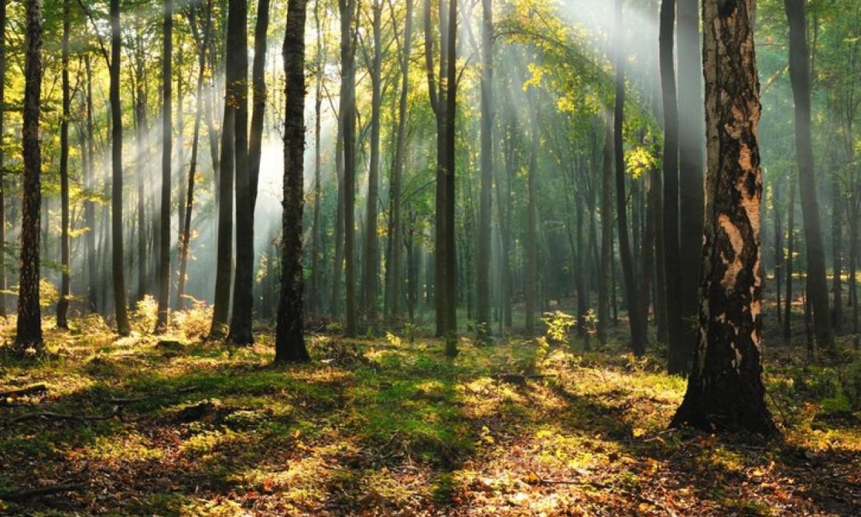 Erdőket fejleszt Budapesten a Pilisi Parkerdő Zrt.