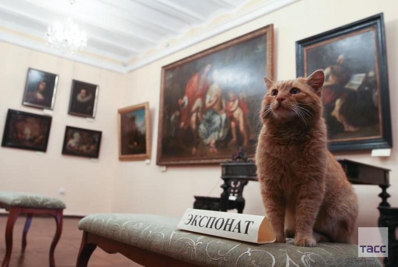 A kemény munka elismeréseként megalakult a múzeumi macskák és gondozóik szakszervezete!