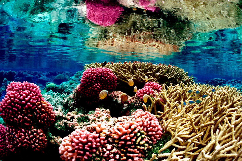 Megszámolták a korallokat a Csendes-óceánban