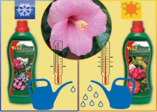 A növények alapvető életfeltételei – II.