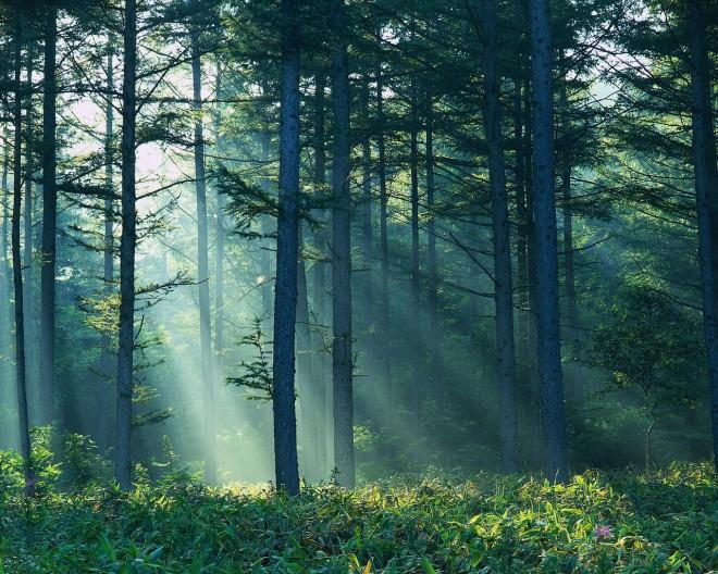 2011 az Erdők Nemzetközi Éve