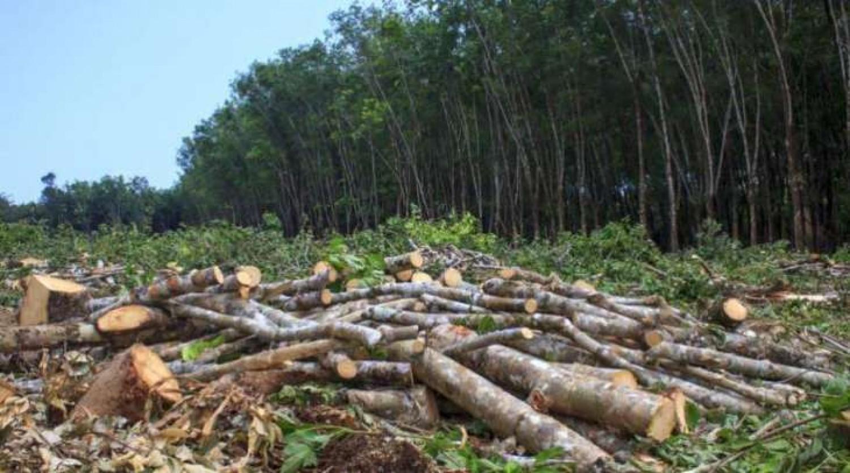 A klímaváltozás az erdőirtásokkal kezdődött