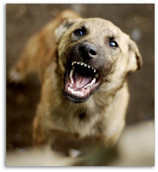 Kutyatámadásra felkészülni!