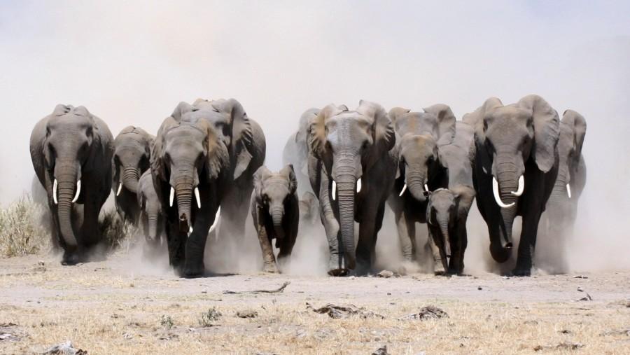 Meddig halljuk még az elefántdübörgést?