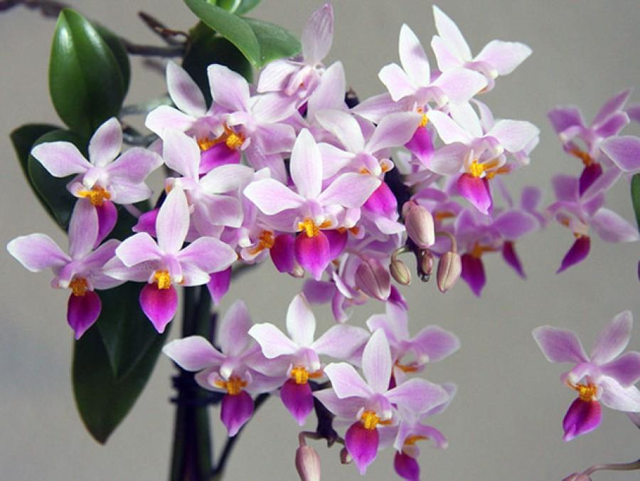 Elhervad, elszárad nálad az orchidea? Ezzel a fajtával garantál a siker!