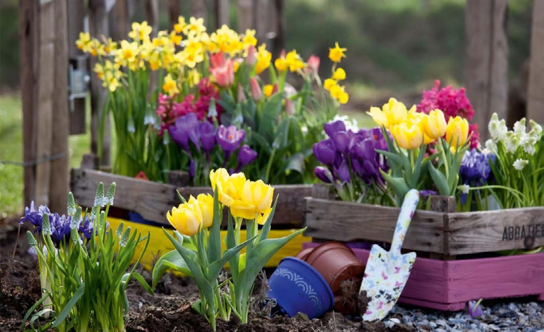 A növényeik is érzik a tavaszt! Igy készítsük fel őket!