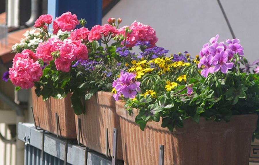 Fakó virágok, foltos levelek? Nézd meg milyen tápanyag hiányzik a növényednek!