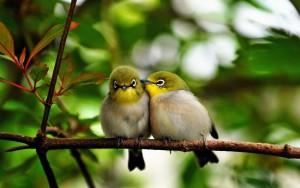 nature-birds_00409905