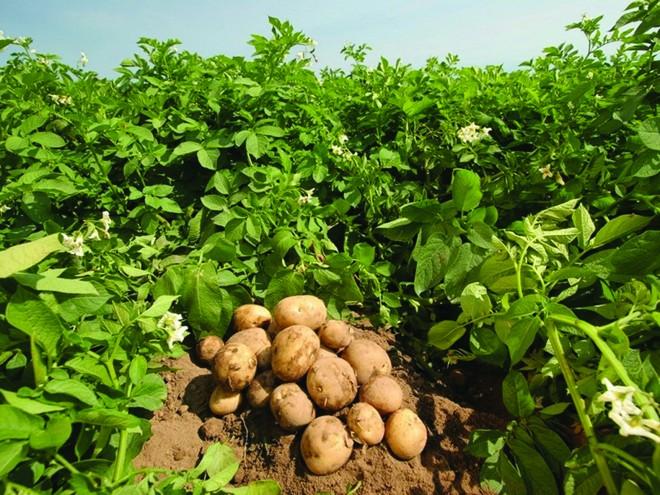 Legyen több és jobb a termése!  A NATÚR BIOKÁL® KÉSZÍTMÉNYEK HASZNÁLATÁVAL!