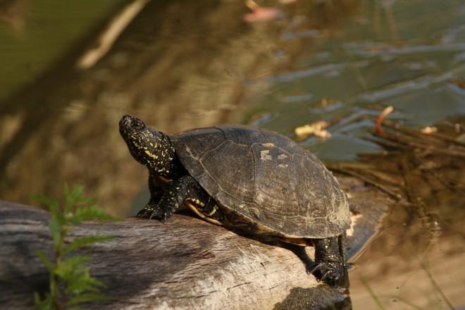 Teknősökről – pro és kontra