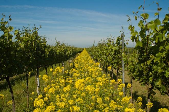 Mit is jelent a bio, ha bor?