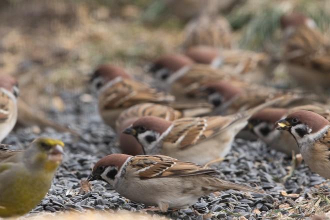 Téli madárkavalkád