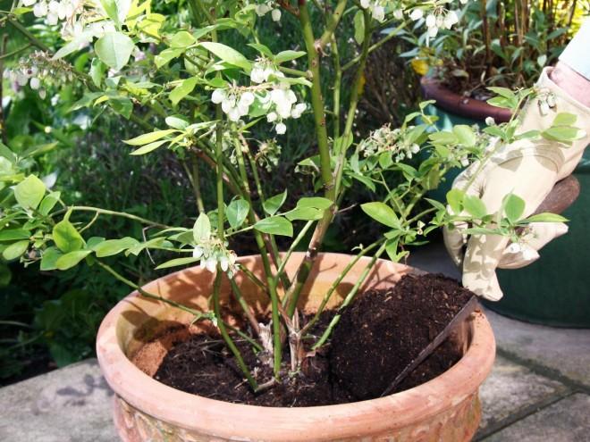 Amit a növényápolásról tudni érdemes I.