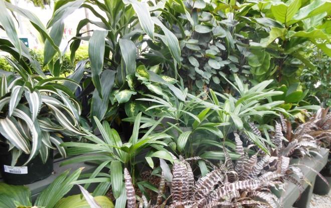Amit a növényápolásról tudni érdemes II.