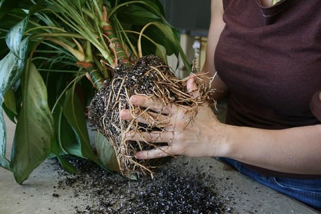Amit a növényápolásról tudni érdemes - Ültetés, átültetés