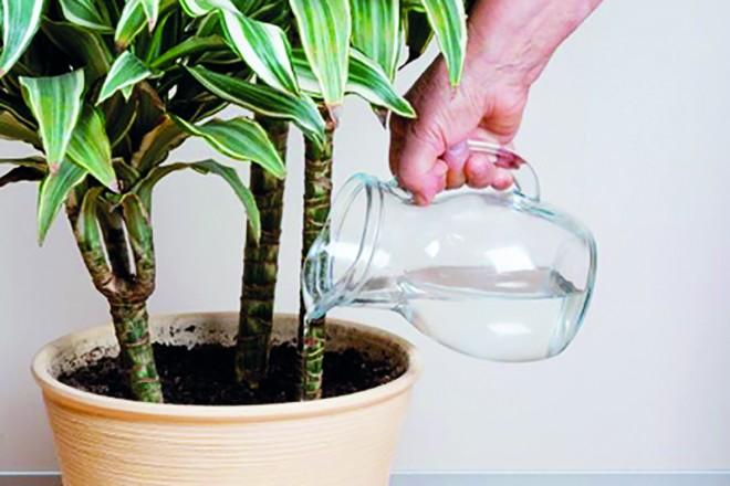 Szuper trükkök, hogy szebben virágozzanak a szobanövényeid!