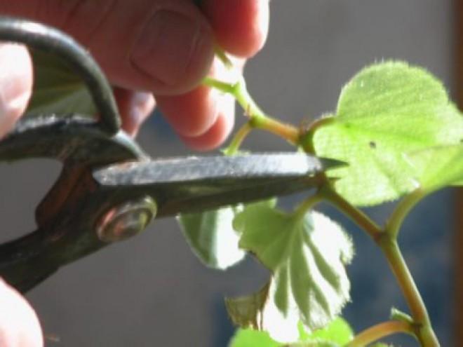 Amit a növényápolásról tudni érdemes V.