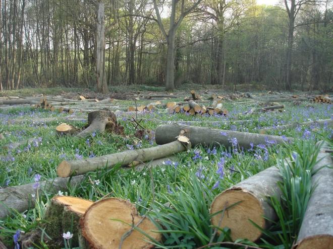 Veszélyben hazánk legidősebb erdei