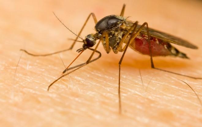 Világméretű sárgalázjárvány jöhet