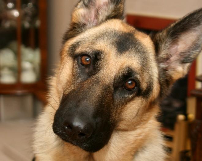 Tudod miért hajtják a kutyák oldalra a fejüket, amikor beszélsz hozzájuk?