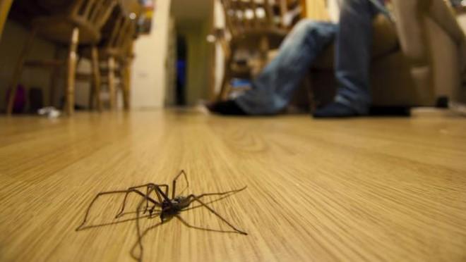 Így tartsd távol a pókokat!