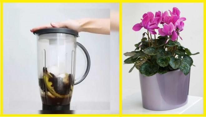 Így készíts konyhai hulladékból tápoldatot virágos növényeidnek!