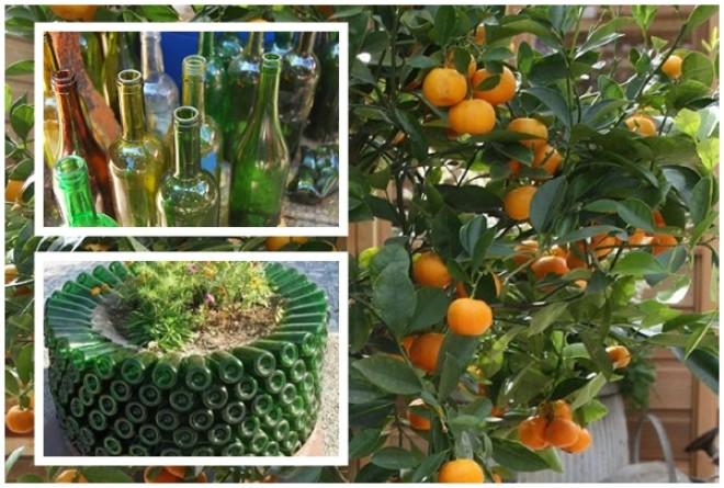 Ezért garantáltan irigyelni fog a szomszéd! Termessz a kertedben trópusi gyümölcsöt!