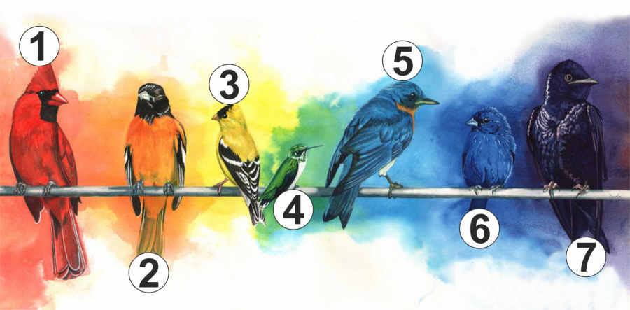 Válassz egy madarat! Megmutatja mire van most a legnagyobb szükséged!