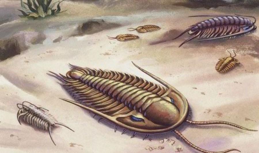 Megoldódott a rejtély! Így jelentek meg az első állatok a Földön!