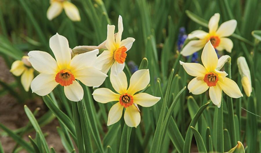 Fontos feladat, ha tavasszal gyönyörű virágokat akarunk!!!