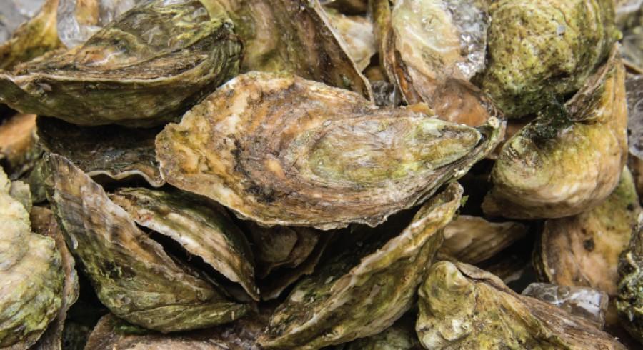 A kagylók olyanok mint a tehenek! - mindketten jelentős metánkibocsátók