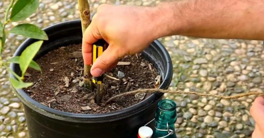 Ezzel a zseniális megoldással egy hónapig sem kell öntözni a növényeket!