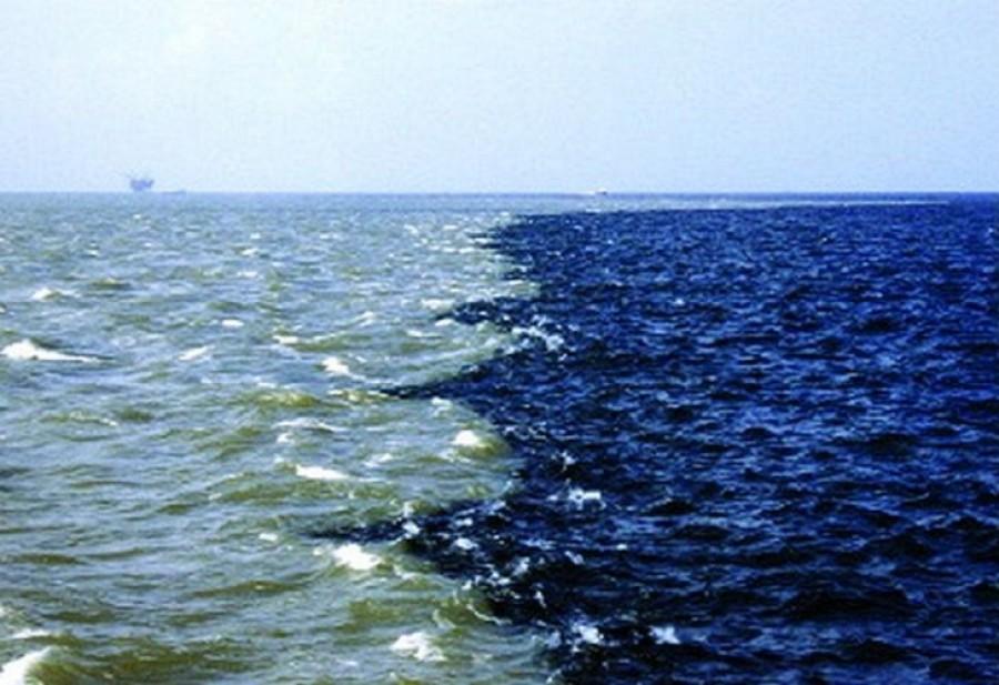 A tengeri állatok szabályosan megfulladnak!