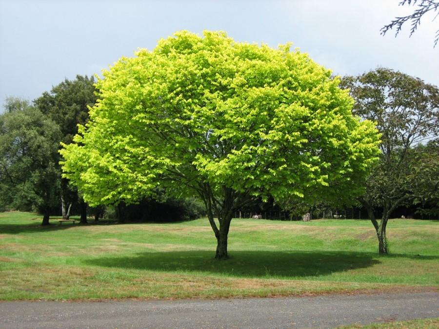 Fákkal egy élhetőbb világért