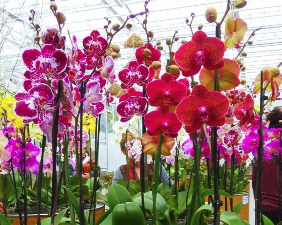 Egy pici falu egy elvarázsolt erdővel és 2 millió orchidea!