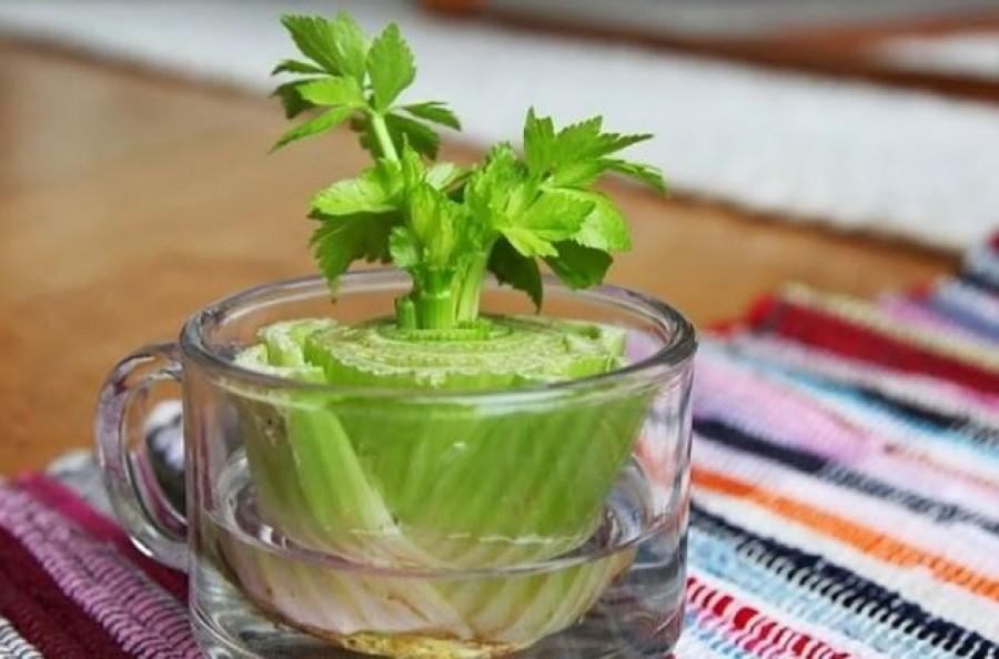 Elég egyszer megvenni! Ezek a zöldségek folyamatosan képesek megújulni, kihajtani.