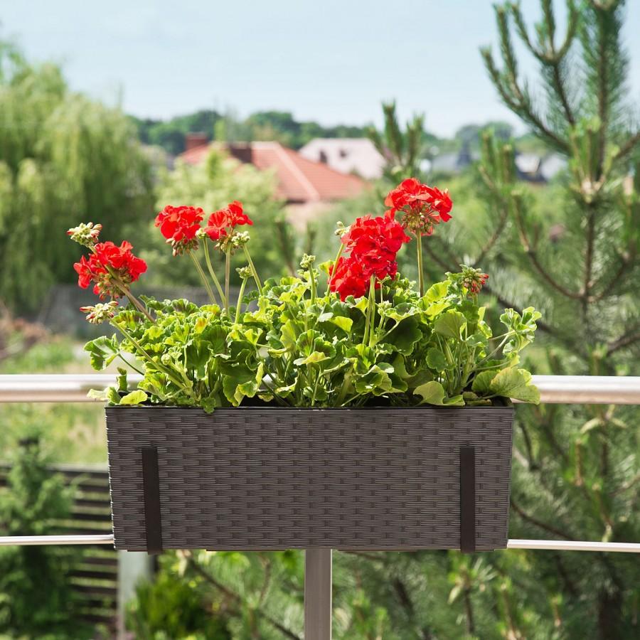 5+1 tipp az egész nyáron dúsan virágzó balkonhoz