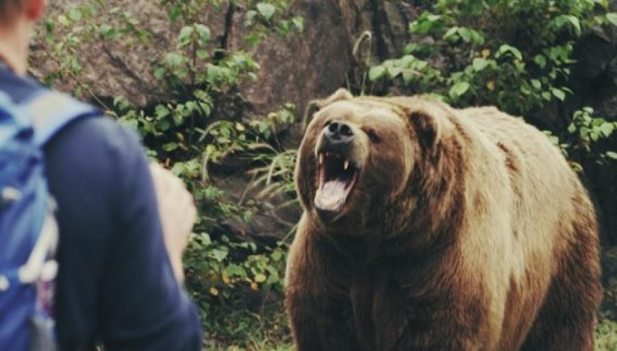 Egy kilencéves kisfiúra támadt rá a medve Erdélyben