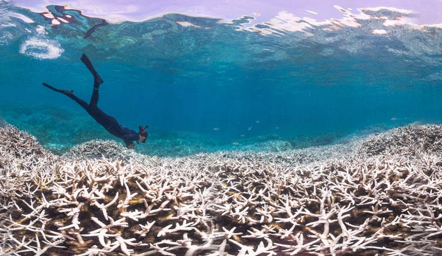 Aggasztó a helyzet! Japán legnagyobb korallzátonyának mindössze egy százaléka egészséges!