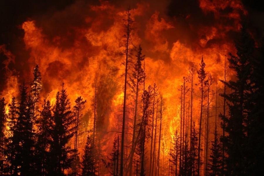 FRISS! - Tűz ütött ki a csernobili zónában lévő Vörös-erdőben
