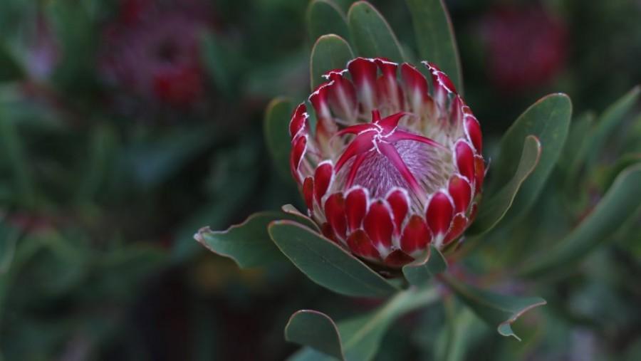 Ilyen gyönyörű a remény virága